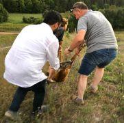 Bahçe tellerine takılan yavru karacayı vatandaşlar kurtardı