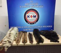 Bolu'da yabani hayvan postu operasyonu