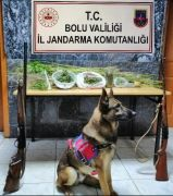 Bolu'da uyuşturucu operasyonu: 2 tutuklama
