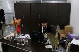 Soğuktan etkilenen kedilere Bolu Belediyesi kapılarını açtı