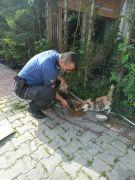 Bolu'da, polis ekipleri  sokak hayvanlarını unutmadı