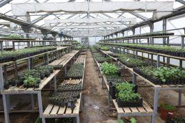 Bolu Belediyesi, zarar gören çiftçilere 400 binin üzerinde fide dağıttı