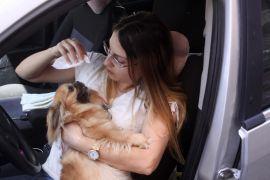 Sahibi tarafından arabada bırakılan Şanslı isimli köpek, duyarlı vatandaşlar sayesinde kurtuldu