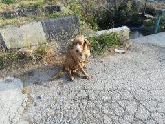 Bolu'da, gözleri görmediği için su kuyusuna düşen köpeği itfaiye kurtardı