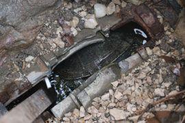 Havuzun gider borusuna sıkışan kaplumbağayı itfaiye kurtardı