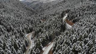 Yılbaşı öncesi kaçak ağaç kesenlere 5 yıl hapis cezası uyarısı