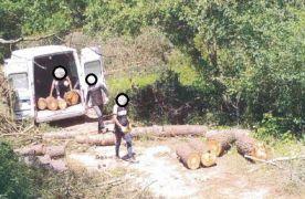 Bolu'da ormanlar yapay zeka fotokapanlarla korunuyor