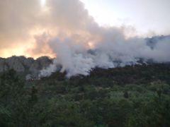 Bolu'da orman yangınında 7 hektar alan zarar gördü