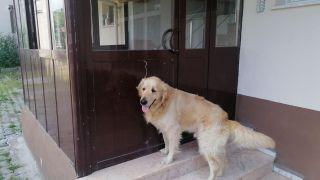 Kapıyı açmak için anahtar kullanabilen köpeğin yeteneği şaşırttı