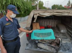 Jandarma ekipleri devriye sırasında buldukları yaralı kuşu etle besledi