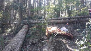 Orman işçisi kestiği ağacın altında hayatını kaybetti